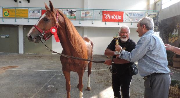 Izbor najljepšeg konja pasmine gidran na 24. Jesenskom međunarodnom bjelovarskom sajmu, 9. rujna 2016., sajamski prostor u Gudovcu kraj Bjelovara FOTO: Dubravka Dragičević www.bjelovar.hr